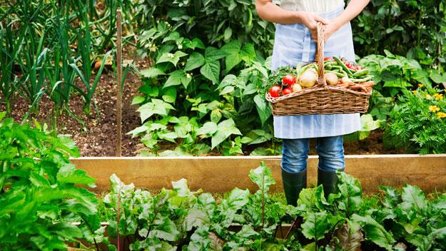 Desarrollo agr cola la soluci n a la crisis alimentaria for Que es una mesa de cultivo