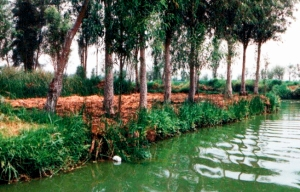 cultivo_en_chinampa