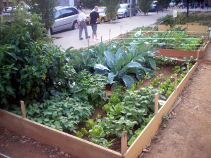 Hidropon a una opci n para contrarrestar el calentamiento for Asociacion cultivos huerto urbano