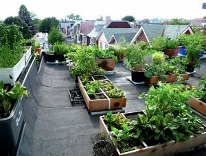 cultivos_verdes