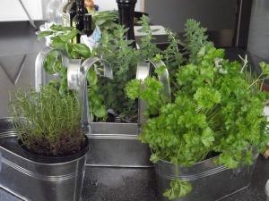 herbs-167725_6407