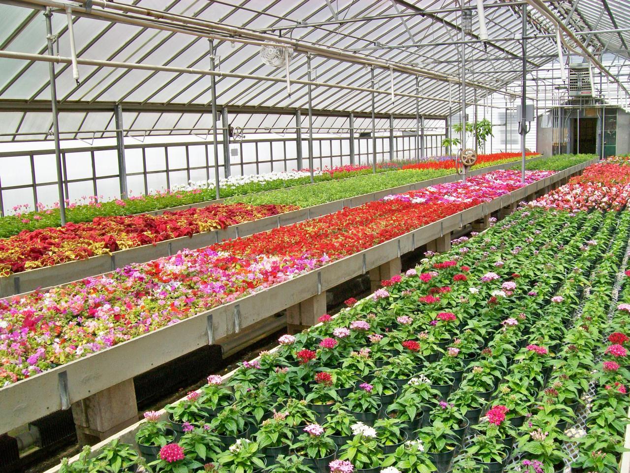 Flores otro beneficio del cultivo hidrop nico Plantas de invernadero