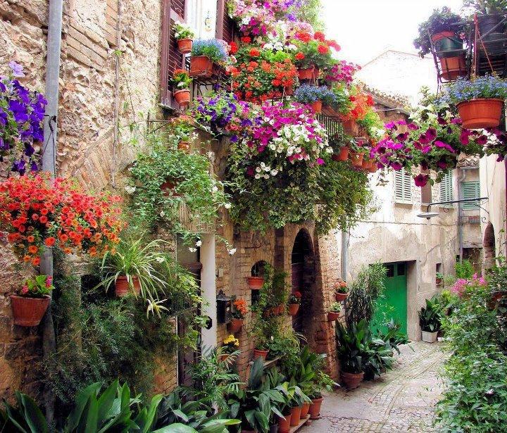 Flores otro beneficio del cultivo hidrop nico - Macetas para balcon ...