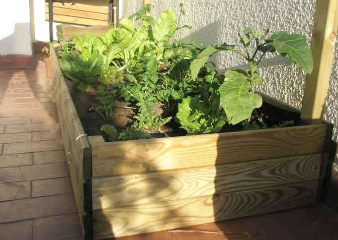 Huerto organop nico paso a paso for Plantas beneficiosas para el huerto