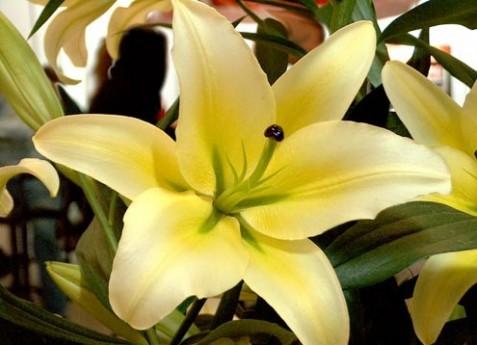 La floricultura en m xico un desarrollo potencial para la for 10 plantas de ornato