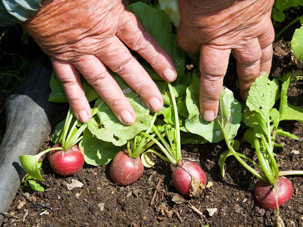cultivo de hortalizas sin nimo de econom a mexicana