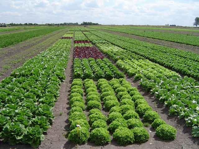 Cultivo de hortalizas sin nimo de econom a mexicana for Manejo de viveros forestales