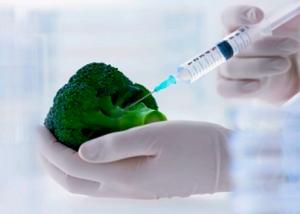 Brócoli Transgenico