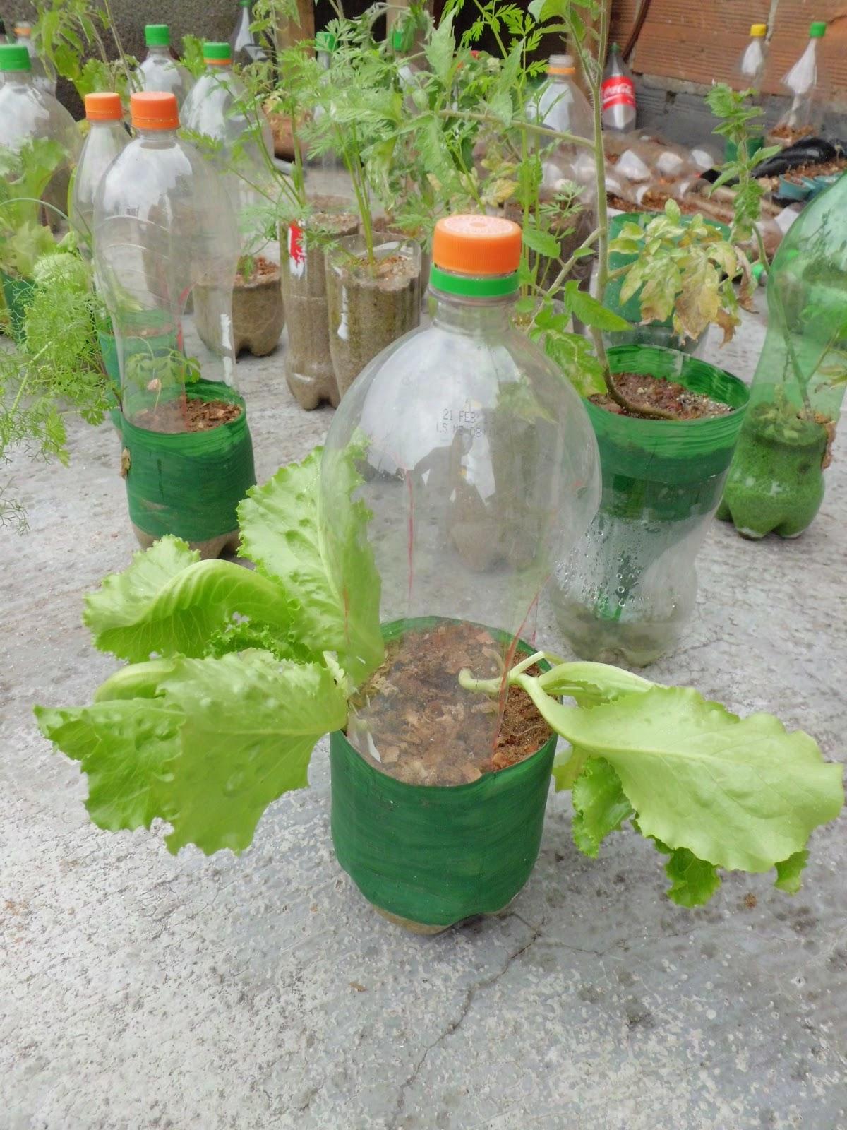 botellas para cultivo casero