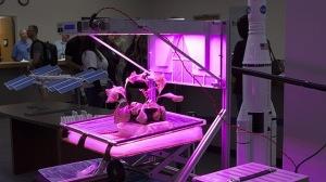 cultivo en la NASA