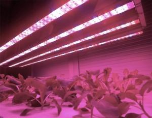 LED JAPAN