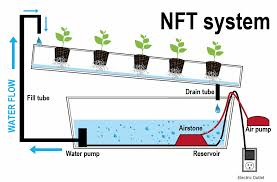 sistema completo NFT